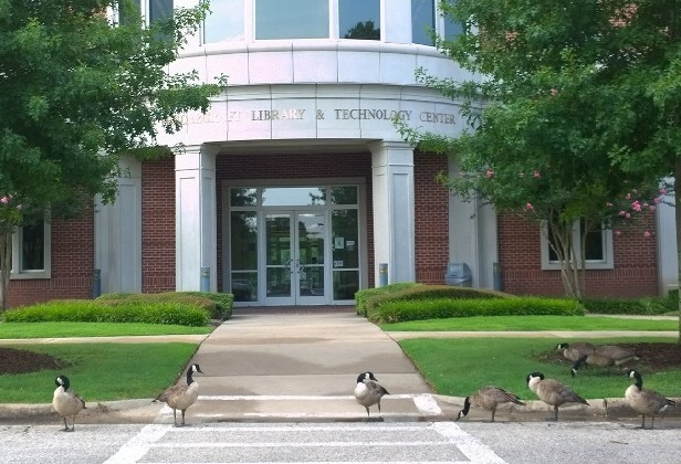 Geese at the library